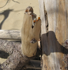Marienkäfer - Tiere, Insekten, Schreibanlass, Meditation