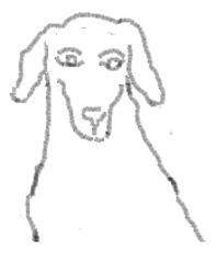 Mischling_Ausmalbild - Hund, Haustier, Mischling, Mischlingshund, Streuner