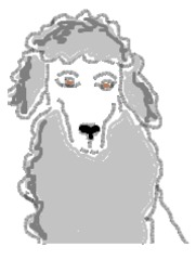 Pudel_bunt - Hund, Haustier, Pudel, bunt