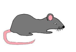 Ratte - Ratte, Anlaut R