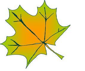 herbstliches Ahornblatt - Herbst, Ahornblatt, Blatt, Ahorn, bunt