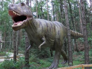 Dinosaurier in einem Dino-Park #17 - Tyrannosaurus Rex - Urzeit, Dinosaurier, Saurier, groß, ausgestorben, Urzeittier, Urzeittiere, gefährlich, Krallen, Echse, Evolution, Drache, Biologie, Dino, Fossil, Zähne, Tyrannosaurus Rex, Fleischfresser, Kreide