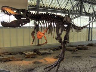Dinosaurier in einem Dino-Park #26 - Skelett - Urzeit, Dinosaurier, Saurier, groß, ausgestorben, Urzeittier, Urzeittiere, gefährlich, Krallen, Echse, Evolution, Drache, Biologie, Dino, Fossil, Skelett, Knochen