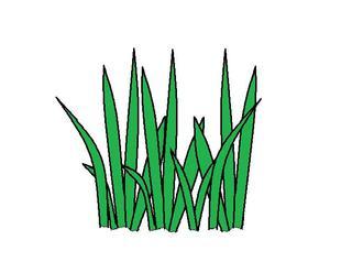 Gras - Gras, Halme, grün, Büschel, Grasbüschel, Anlaut G, Rasen
