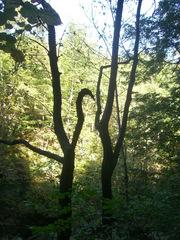 Waldspaziergang - Bäume, Wald, Sonne, Himmel, grün, Schreibanlass