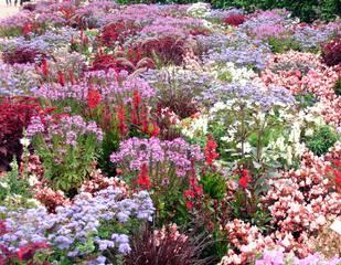 Blütenmeer im Sommer - Sommer, Blume, Blumen, Sommerblumen, Stauden, Beet, Blumenbeet, Gartenbeet, Blüten, blühen, duften, rot, lila, violett, hellblau, rosa