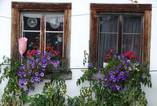 Blumenfenster - Fenster, Holzfenster, Glas, Holzrahmen, alt, Erzählanlass, Schreibanlass, Idylle, idyllisch, Bretagne, bretonisch, Blumen, Petunien, Geranien, Rot, Lila, Grün, Tomaten
