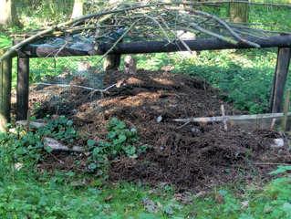 Nest der Roten Waldameise - Rote Waldameise, Ameise, Wald, Bau, Formica, Volk, Nest, Haufen, Ameisenstaat, Hautflügler