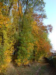 Goldener Herbst#1 - Herbst, Gold, Mischwald, Bäume, Laub, Herbstspaziergang