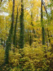 Goldener Herbst#5 - Mischwald, Herbst, Sonne, sonnig, Stimmung, Impression, Bäume
