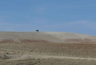 Baum in Landschaft - Baum, Landschaft, Spanien, karg, Ödnis, Einsamkeit, Schreibanlass, Sprechanlass