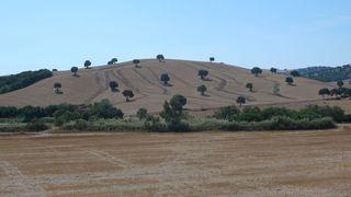 Bäume in Landschaft - Baum, Bäume, Landschaft, Spanien, karg, Schreibanlass, Sprechanlass