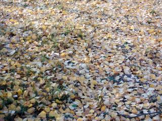 Herbstlaub#1 - Kunst, herbstlich, Hintergrund, Birke, Blatt, Betrachtung, Laub, Boden, Herbst, Wallpaper, Layout