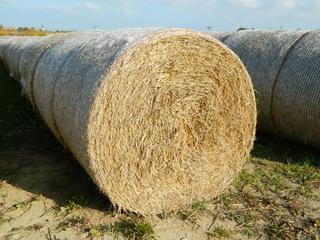 Strohballen - Ernte, Landwirtschaft, Getreide, Stroh, Ballen, Rundballen, rund, rollen, pressen, gepresst, zusammengepresst, Einstreu, Miststreu, Stall, Zylinder, Körper, Mathematik