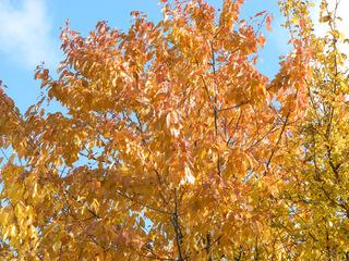 Herbstfarben - Herbst, Bäume, Laub, Jahreszeit, bunt, farbig, Blätter, Impressionen, Gelb, golden