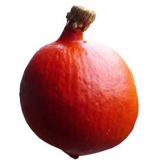 Hokkaidokürbis - Kürbis, Herbst, Gemüse, Gemüsekürbis, Cucurbita, Kletterpflanze, einjährig, krautig, Lebensmittel, orange, rund