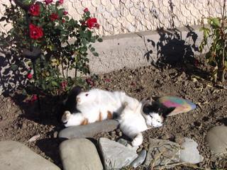 Katze beim Entspannen #1 - Haustiere, Katze, Sand, spielen, räkeln