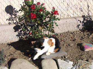 Katze beim Entspannen #2 - Haustiere, Katze, Sand, spielen, fangen, Fliege
