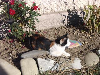 Katze beim Entspannen #4 - Haustiere, Katze, Sand, erschrocken, aufmerksam