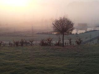 Morgenstimmung - Baum, Nebel, Stimmung, Meditation, Schreibanlass, Meteorologie, Wetter, Wettererscheinung, Wassertröpfchen, Kondensation, Taupunkt, Wasserdampf