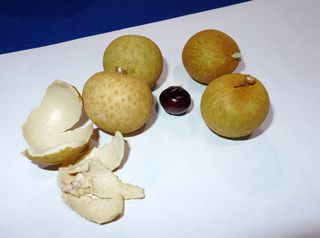 Longan-Früchte - Longan, Seifenbaum, Dimocarpus longan, Asien, gelb, Schale, Frucht