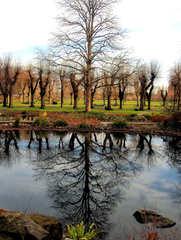 Winterimpression im Park - Winter, Impression, Park, Bäume, Teich, Wasser, Reflexion, Symmetrie, symmetrisch, Baum, Spiegelbild, Spiegelung, Himmel, kahl, Ruhe, Meditation