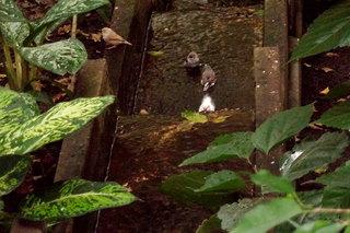 Das Bad der Vögel in den Tropen#1 - Vogel, Vögel, baden, säubern, Gefiederpflege