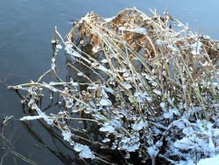 Eisgebilde am Flussufer #2 - Eis, Eiszapfen, Zweige, Winter, Winterimpressionen, kalt, eisig, Wasser, Fluss, gefroren, fest, flüssig, Aggregatzustand, Physik