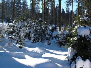 Winterwald im Sonnenschein - Winter, Wald, Schnee, Nadelbäume, Sonne, Schatten, Licht
