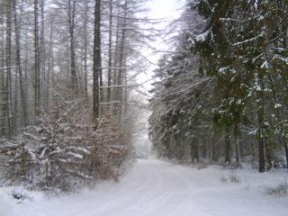 Winterimpression - Wald, Waldweg, Weg, Pfad, Winter, Schnee, verschneit, unbelaubt, romantisch, einsam, Nadelbäume, Laubbäume