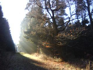 Waldschneise im Herbstnebel - Waldweg, neblig, Wald, romantisch, sonnendurchflutet, Lichtstrahl, Optik, geradlinig
