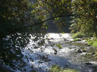 Weiße Elster - Fluss, Elster, Weiße Elster, Nebenfluss, Saale, Sonne, Strömung, Licht, Gegenlicht, Baum