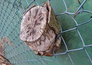 Zaun mit eingewachsenem Baum(strunk) - Zaun, Maschendrahtzaun, Drahtgeflechtzaun, Draht, Maschendraht, Strunk, Baumstumpf, Schreibanlass