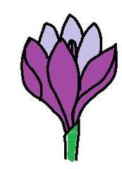 Clipart Krokus - Krokus, Illustration, Frühblüher, lila, Frühling, Blüte