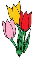 Clipart Tulpen - Tulpe, Tulpen, bunt, rot, gelb, rosa, Frühblüher, Illustration, Frühling, Zeichnung