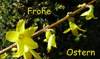 Ostergruß deutsch - Ostern, Ostergruß, frohe, Ostern, Grußkarte
