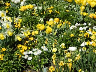 Frühlingsbeet - Frühling, Blumen, Beet, weiß, gelb, Frühblüher, Blüten, Blütenpracht, blühen