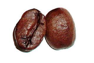 Kaffeebohne - Kaffeebohnen, Samen, geröstet, Kaffee, Heißgetränk, Genuss, Genussmittel, braun, zwei, Steinkerne, Kerne, Coffein