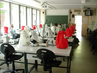 Labor - Labor, Forschung, Biologie, Mikroskope, Arbeit, Laborantin
