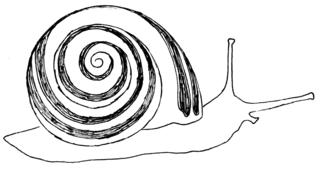 Schnecke - sw - Schnecke, Weichtier, Gastropoda, Schnirkelschnecke, Bänderschnecke, Schneckenhaus, Gehäuse, Illustration, Wörter mit ck