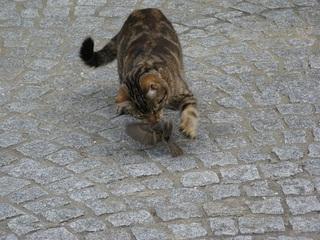 Katze mit Beute #4 - Katze, Beute, Beutetrieb, Jagdtrieb, Haustier, Vogel, Sperling