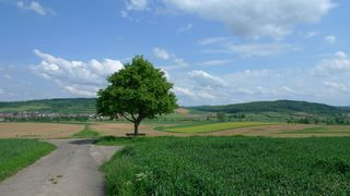 Baum in Landschaft - Baum, Ruhe, Bank, Meditation, Schreibanlass, Wolken, Himmel, Rastplatz, Einkehr