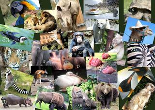 Wildtiere aus aller Welt - Collage - Tiere, Wildtiere, international, Tier, Papagei, Ara, Bär, Braunbär, Bison, Eisbär, Elefant, Erdmännchen, Flamingo, Giraffe, Kanguru, Pinguin, Kaiserpinguine, Kamel, Krokodil, Schildkröte, Landschildkröte, Lemur, Katta, Löwe, Löwen, Pelikan, Gorilla, Nashorn, Nilpferd, Orang Utan, Schimpanse, Tiger, Zebra, Impuls, Bildimpuls, Gesprächsanlass, DaF