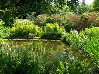 Tümpel  - Tümpel, Teich, Gewässer, Biotop, Pflanzen, Wasserpflanzen, Wasser, Gräser, Farn, Lilien, Stauden, grün, Sonne, Schatten, Licht, Ruhe, Meditation, Entspannung