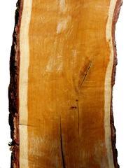 Stamm Längsschnitt - Stamm, Längsschnitt, Holz, Werkstoff, Rohstoff, nachwachsend, Kambium, Rinde, Kernholz, Bast, Splintholz, Jahresringe, Kern, Markstrahlen, Borke, Laubholz