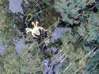 Spinne im Netz - Spinne, Netz, sonnig, Lichtreflexe, Blätterdach, Schreibanlass, Gliederfüßer, Spinnentiere, Häutungstiere
