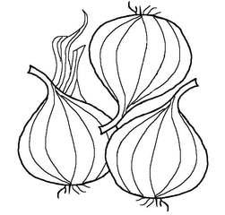 Zwiebeln sw - Zwiebel, Zwiebeln, Früchte, Frucht, scharf, Gemüse, Mehrzahl, Plural