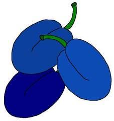 Pflaumen farbig - Pflaume, Pflaumen, Mehrzahl, Plural, blau, drei, Pfl, Zeichnung, Obst, Zwetschke, Zwetschken, Zwetschge, Zwetschgen
