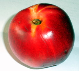 Nektarine #2 - Nektarine, Obst, Tafelobst, Pfirsich, süß, glatt