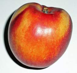 Nektarine#3 - Nektarine, Obst, Tafelobst, Pfirsich, süß